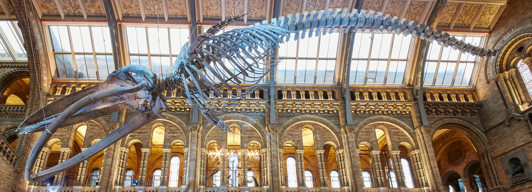 blue-whale-skeleton-natural-history-museum-london-hintze-hall-casson-mann-designboom-